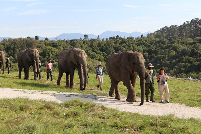 adventure-pads-elephant-walk